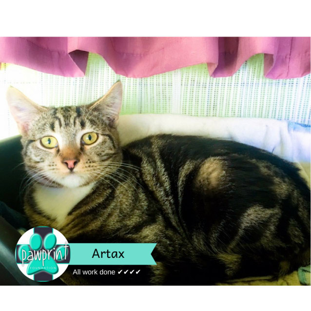 Photo of Artax