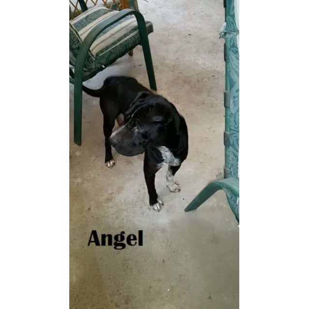 Photo of Angel