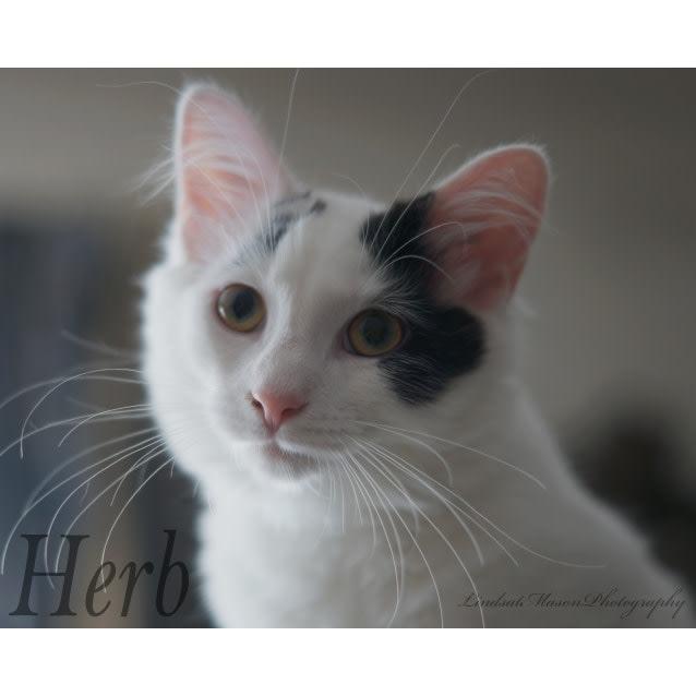 Photo of Sweet Herbie