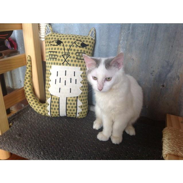 Photo of Dozy