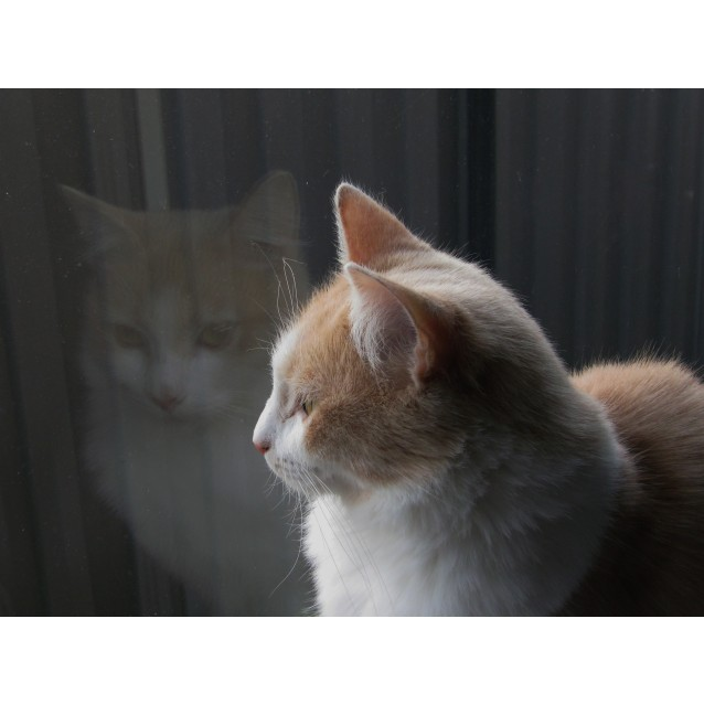 Photo of Olivia    Located In Point Cook
