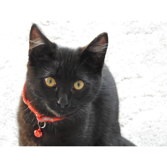 Photo of Coraline