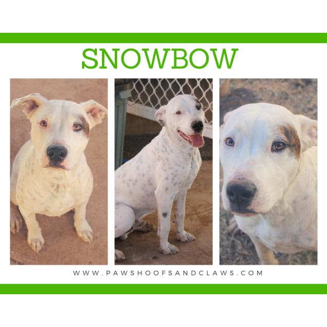 Photo of Snowbow