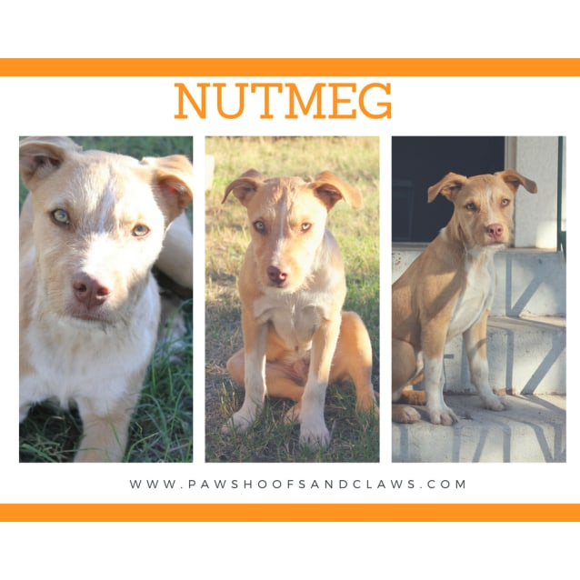 Photo of Nutmeg