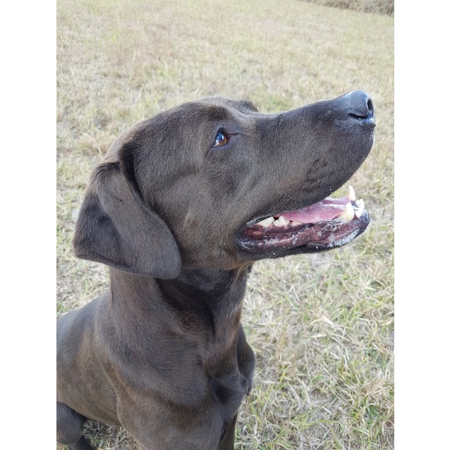 Photo of Tex