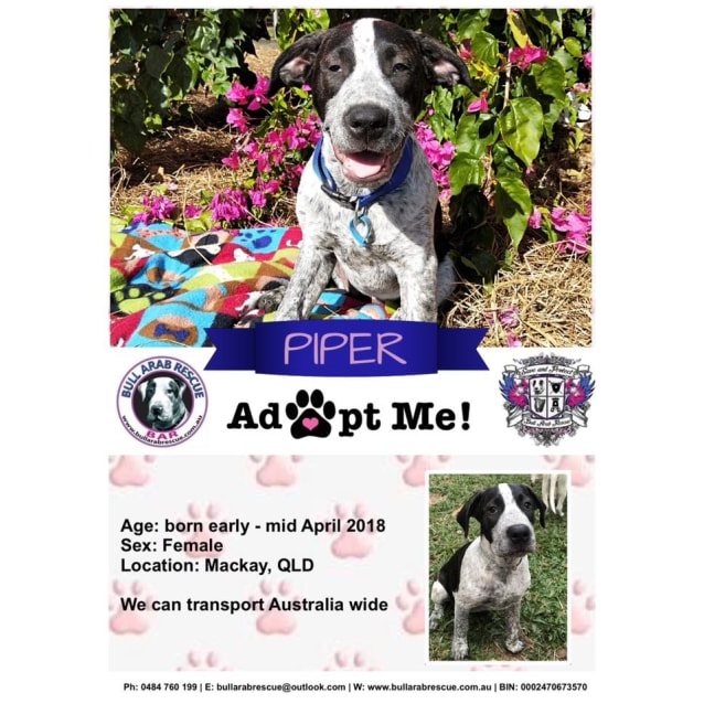 Photo of Piper