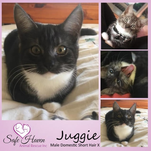 Photo of Jughead/Juggie