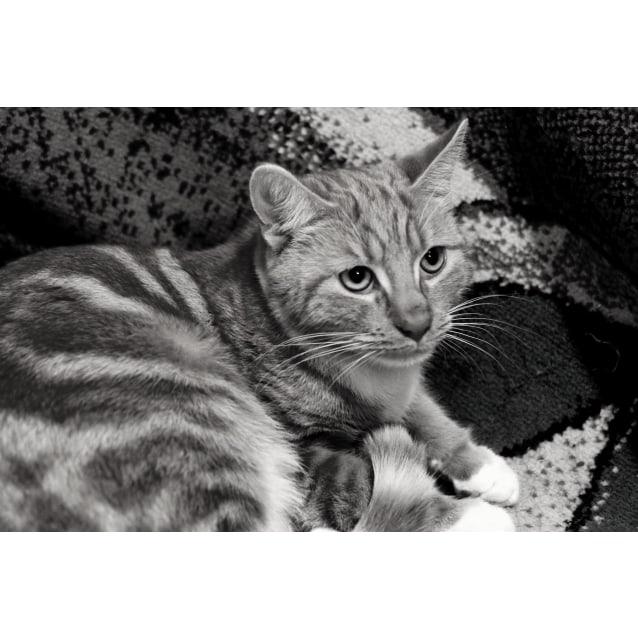 Photo of Garfield