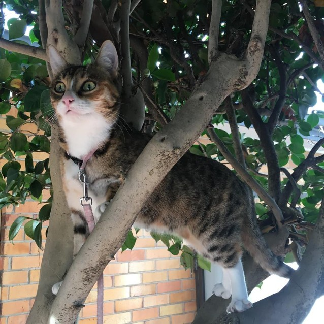 Photo of Ashaki (Located In Oakleigh)