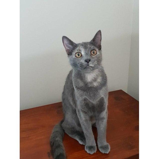 Photo of Frenchie