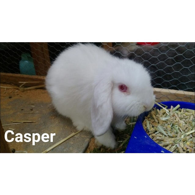 Photo of Casper **On Trial With My New Family**