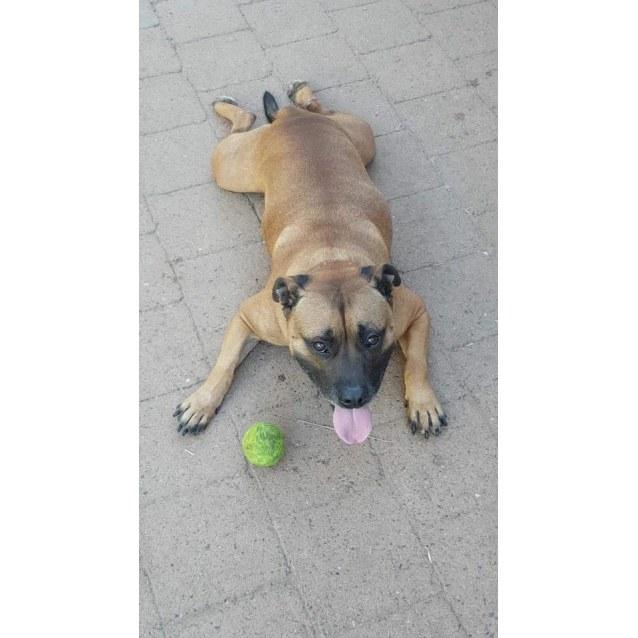 Photo of Oskar
