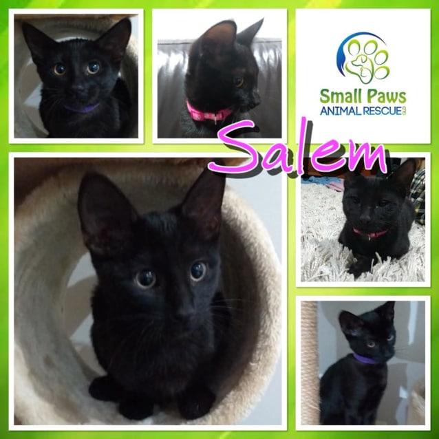 Photo of Salem