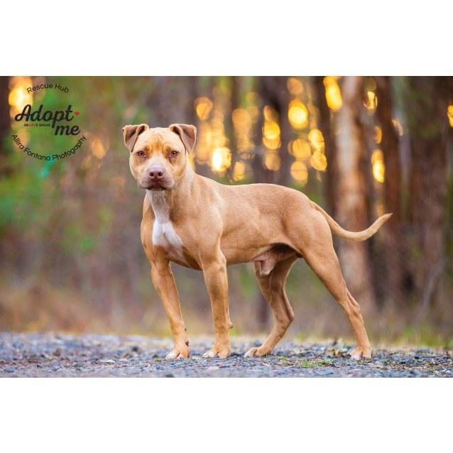 Photo of Tyson