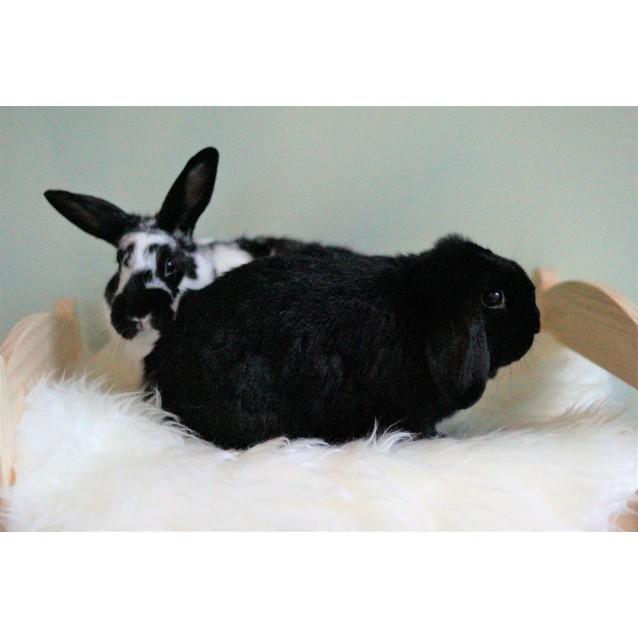 Photo of Arthur And Petunia