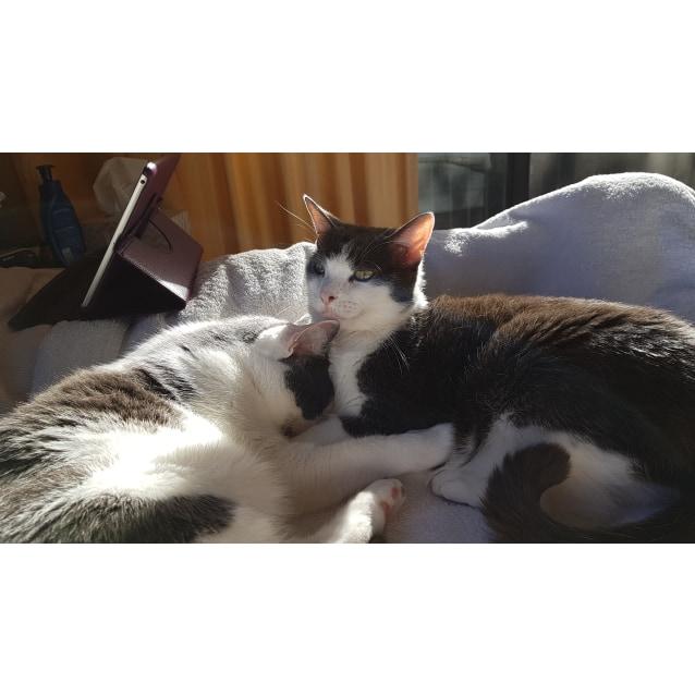 Photo of Otis And Fuji