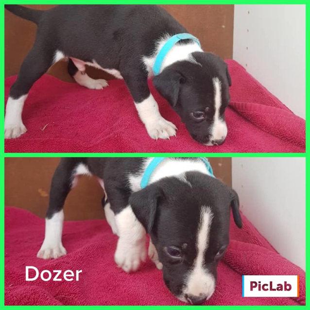 Photo of Dozer