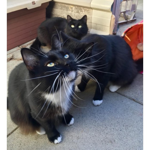 Photo of Kitty And Boo