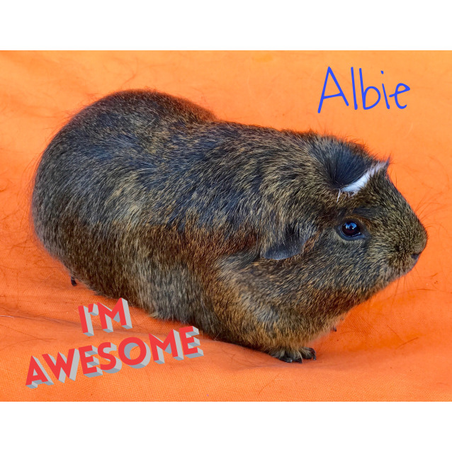 Photo of Albie