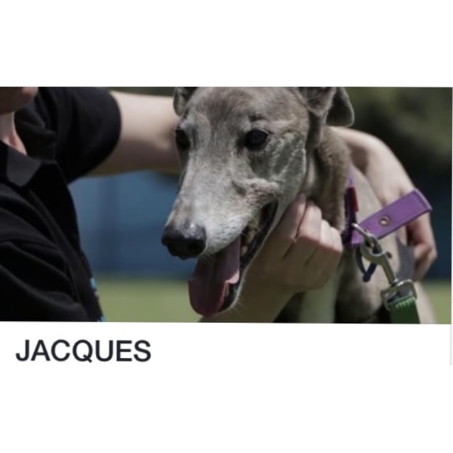 Photo of Jackson