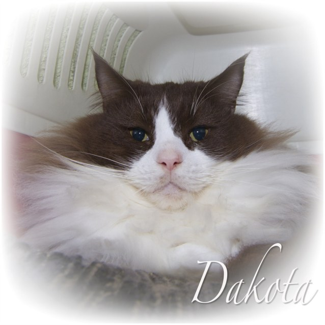 Photo of Dakota