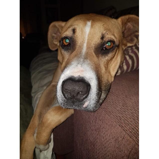 Photo of Kodie