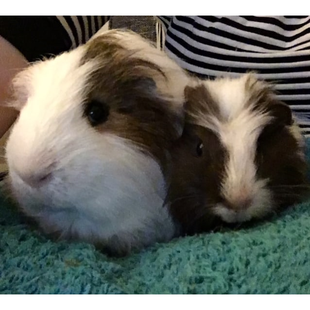Photo of Winnie ( The Poo) And Marlon