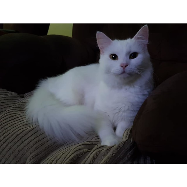 Photo of Romee