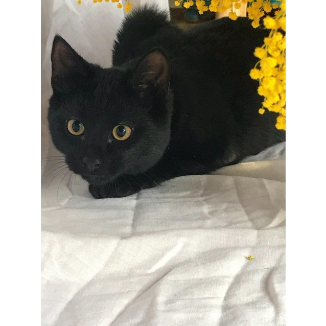 Photo of Black Shadow (Located In Sale)