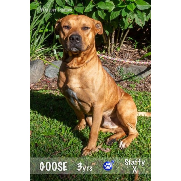 Photo of Goose