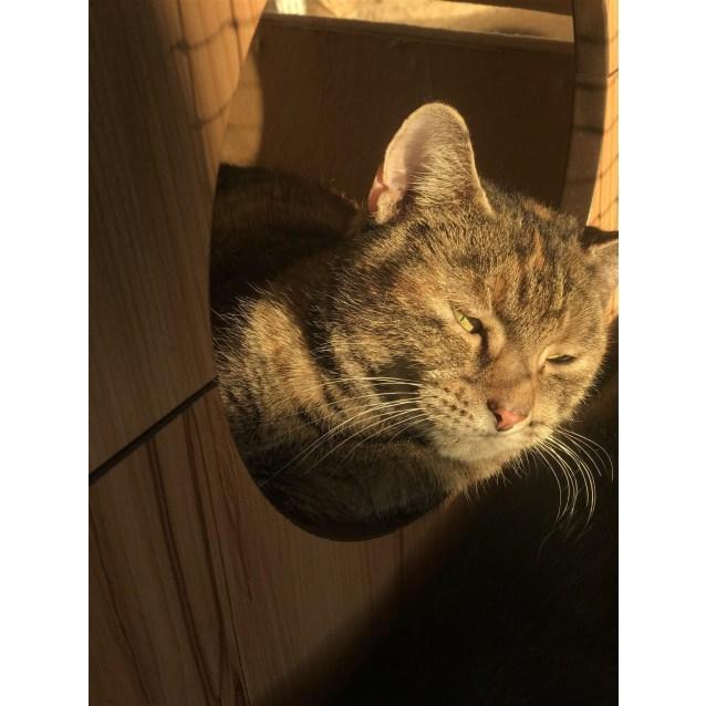 Photo of Jessie