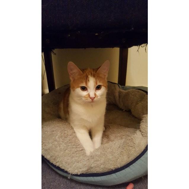 Photo of Tumeric, Aka Ricky The Pretty Boy Kitty!