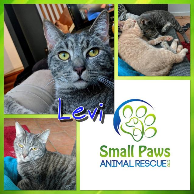 Photo of Levi