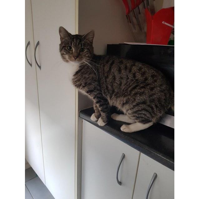 Photo of Trinity ~Rainbow Cat Rescue~