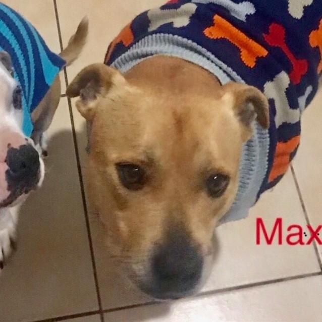 Photo of Rocky (& Max)