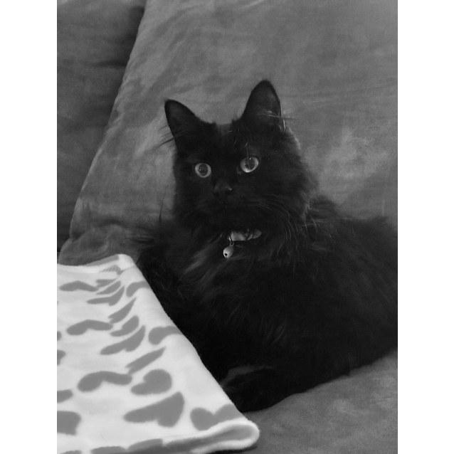 Photo of Dakota 💕