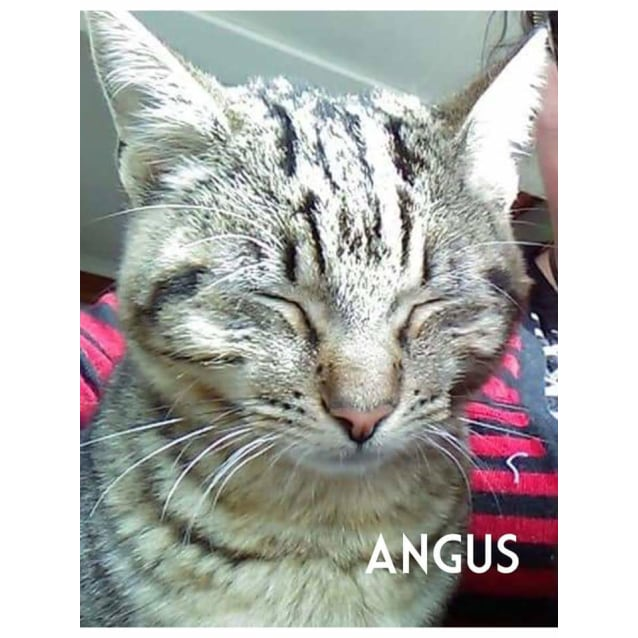 Photo of Angus