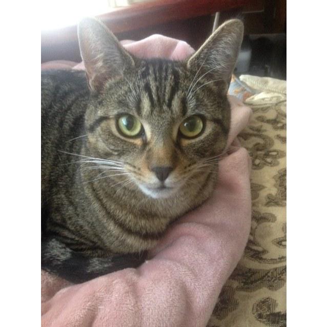 Photo of Frankie (Located In Brunswick)