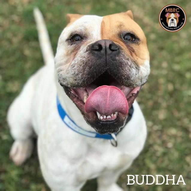 Photo of Buddha