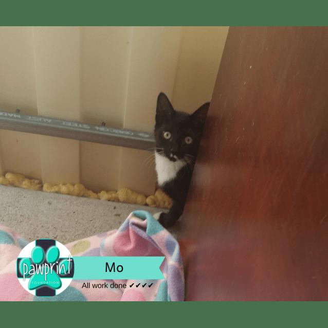 Photo of Mo