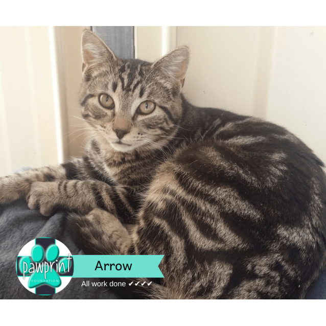 Photo of Arrow