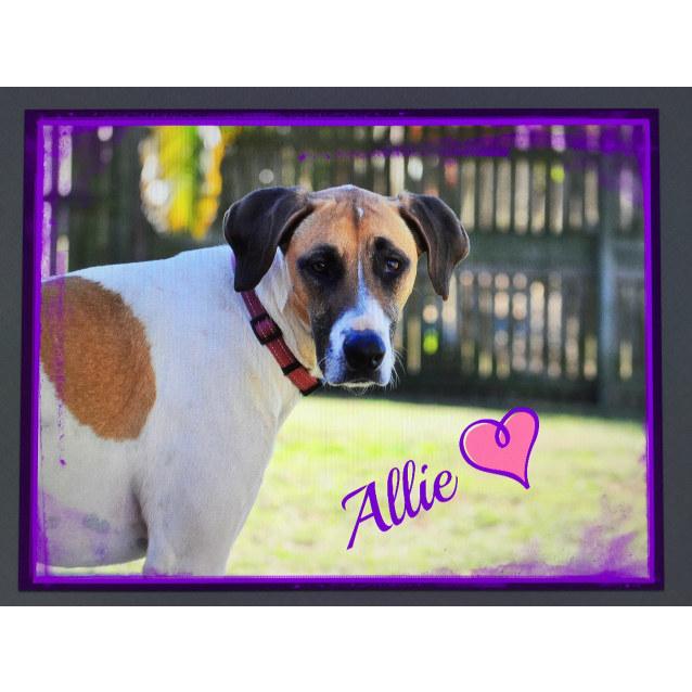 Photo of Allie (Adoption Pending)