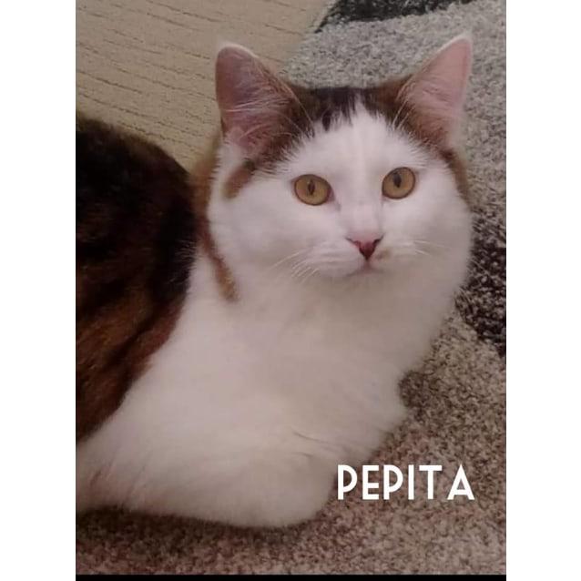 Photo of Pepita