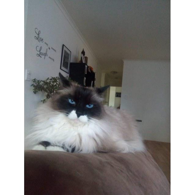Photo of Moxi