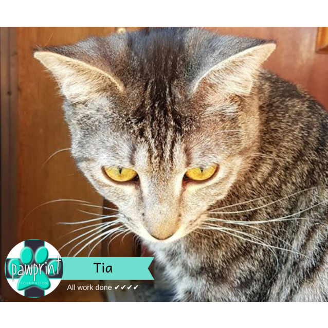 Photo of Tia