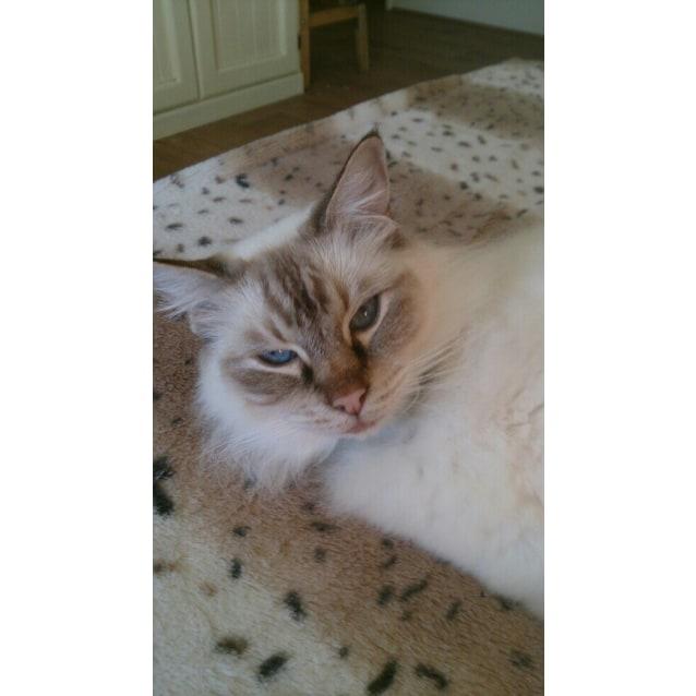 Photo of Missy ( Bn C443)