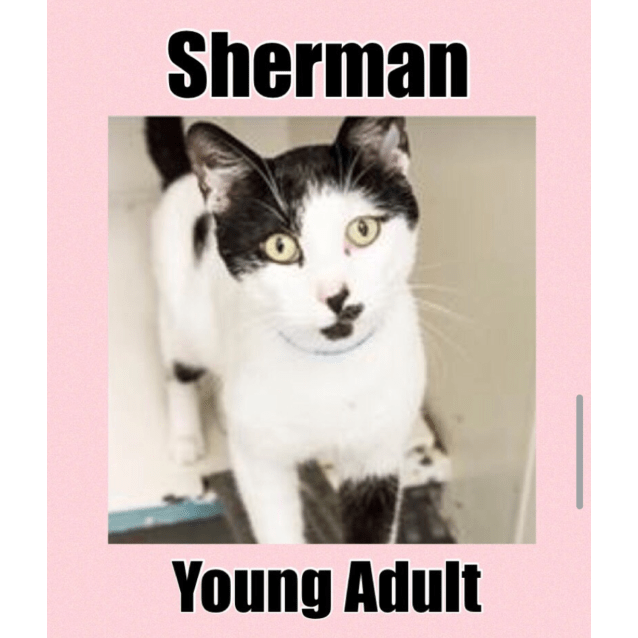 Photo of Sherman