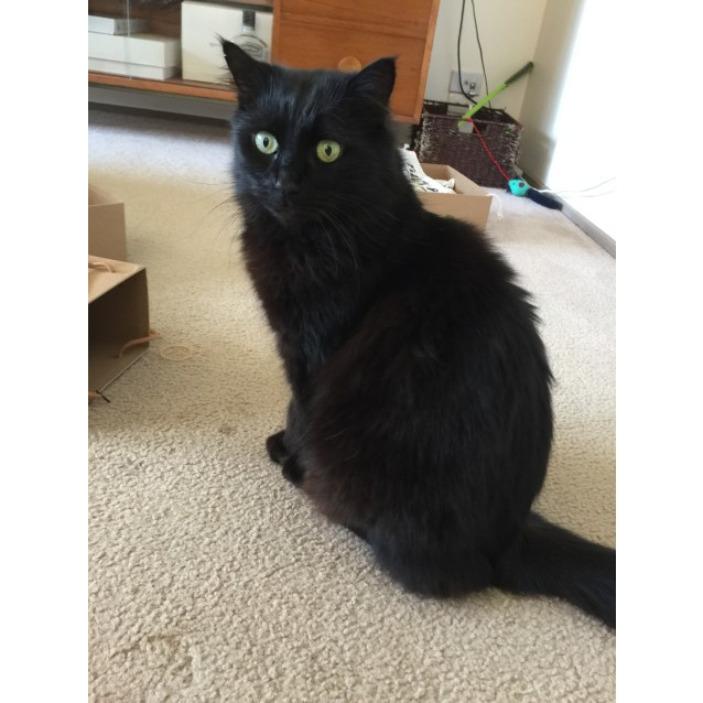 Photo of Sooty (Located In Warragul)