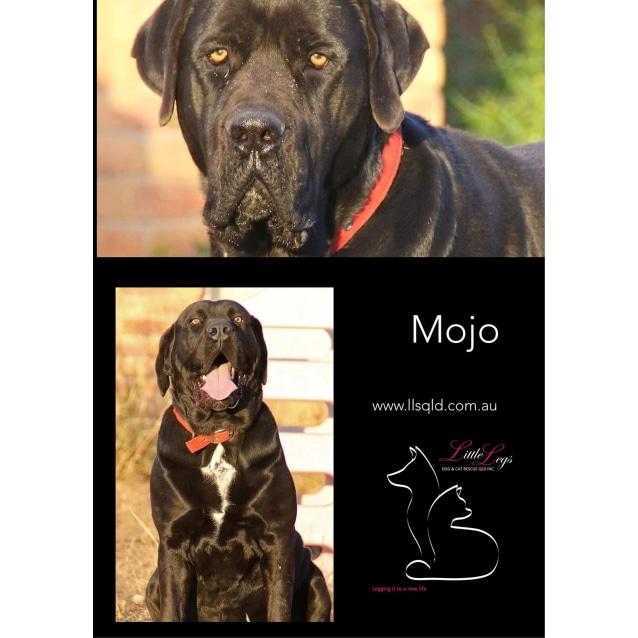 Photo of Mojo