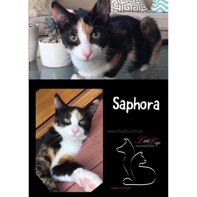 Photo of Saphora